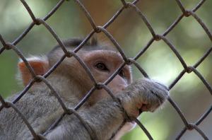monkey-166942_1280