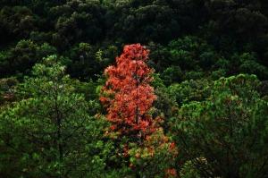 tree-57119_1280